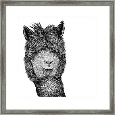 Llama Framed Print by Karl Addison