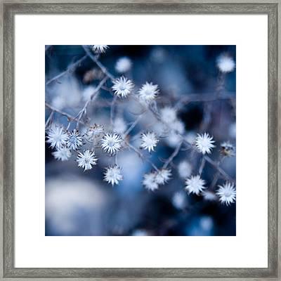 Lonely Winter Framed Print by Ryan Heffron