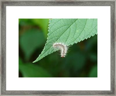 Looking Over Here Framed Print by Morning Dew