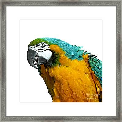 Macaw Bird Framed Print