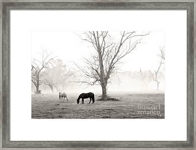 Magical Morning Framed Print