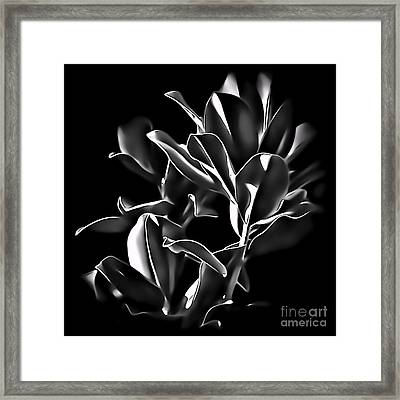 Magnolia Leaves Framed Print