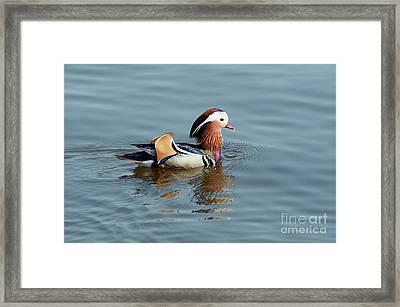 Framed Print featuring the photograph Mandarin Duck by Michal Boubin