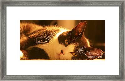 Max The Cat Framed Print by David Warrington