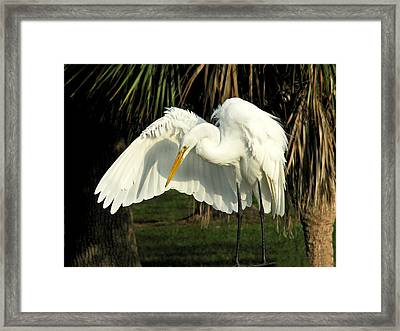 Me And My Shadow Framed Print by Peg Urban