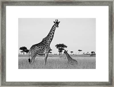 Meet My Little One Framed Print