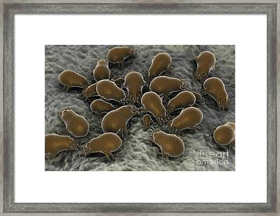 Microscopic Visualization Of A Dust Framed Print