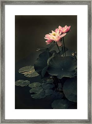 Midnight Lotus Framed Print