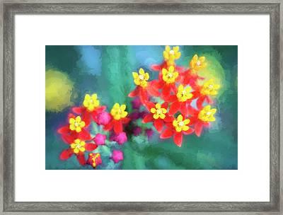 Milkweed Flowers Framed Print by Rich Franco