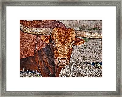Moo Framed Print by Ken Williams