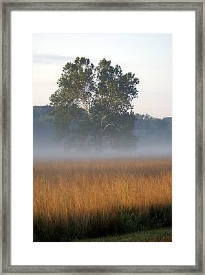Morning Mist Framed Print by Heidi Poulin