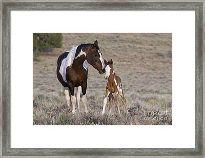 Mustang Mare And Foal Framed Print