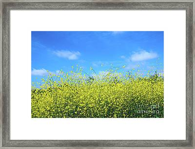 Mustard Beauty Framed Print by Timothy OLeary