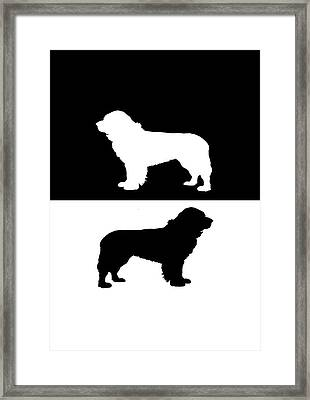 Newfoundland Dog Framed Print