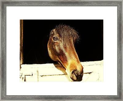 Noble Stallion Framed Print by JAMART Photography