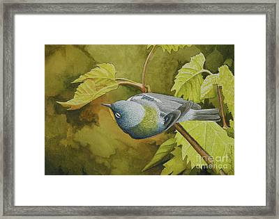 Northern Parula Framed Print