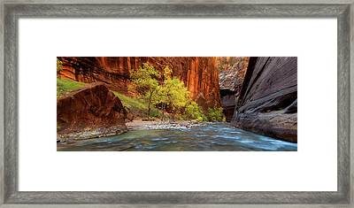 Of Trees And Light Framed Print by Chris Moore