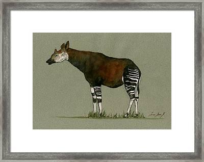 Okapi Art Watercolor Painting Framed Print by Juan  Bosco