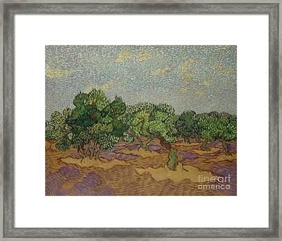 Olive Trees, 1889 Framed Print by Vincent Van Gogh