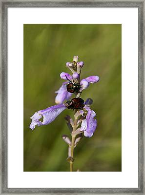 2 On A Flower Framed Print