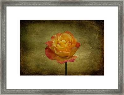 Orange Rose Framed Print by Sandy Keeton
