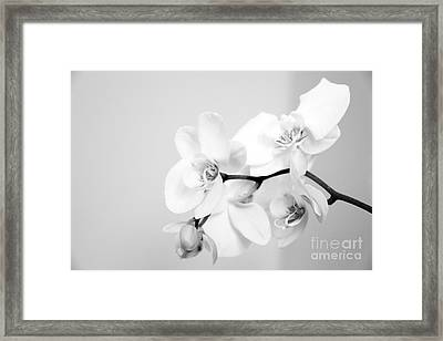 Orchid Framed Print by Amanda Barcon