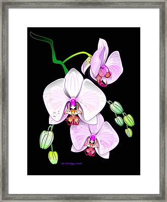 Orchids Framed Print by William R Clegg