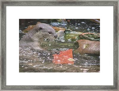 Otter Framed Print by Martin Newman