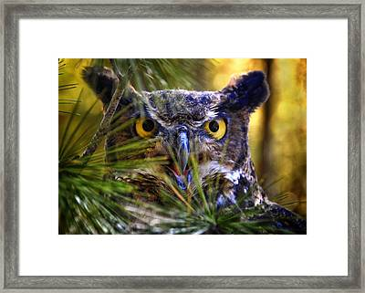 Owl In The Pines Framed Print