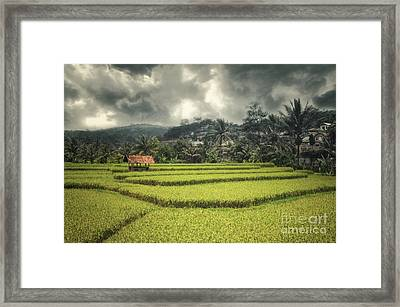 Framed Print featuring the photograph Paddy Field by Charuhas Images