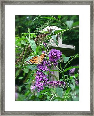 Painted Lady Butterfly Framed Print by Nancy Patterson