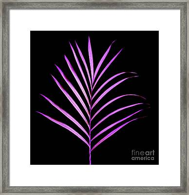 Palm Leaf Framed Print by Tony Cordoza