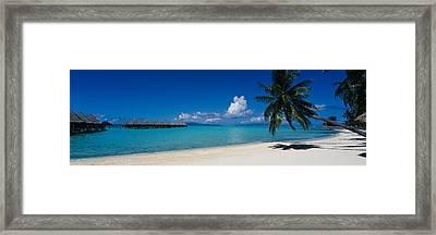 Palm Tree On The Beach, Moana Beach Framed Print