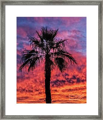 Framed Print featuring the photograph Palm Tree Silhouette by Robert Bales