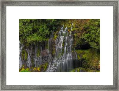 Panther Creek Falls Framed Print by David Gn