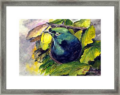 Paradise Bird Framed Print