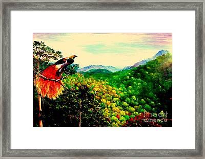 Paradise Bird Of Papua Framed Print