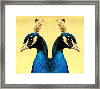 Peacock Framed Print by Falko Follert