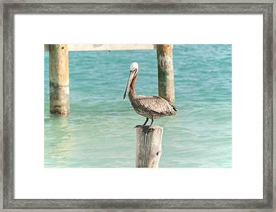 Pelican At Isla Mujeres Framed Print