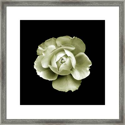 Framed Print featuring the photograph Peony by Charles Harden