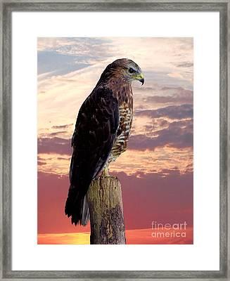 Peregrine Falcon Framed Print by Lynn Bolt