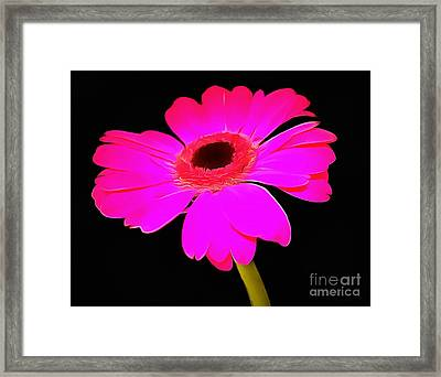 Perfectly Pink  Framed Print by Krissy Katsimbras