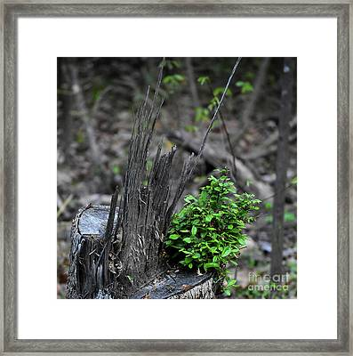 Framed Print featuring the photograph Persistence by Skip Willits