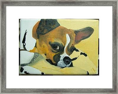 Pet Portrait Original Oil Painting By Pigatopia Framed Print by Shannon Ivins