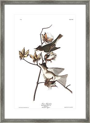 Pewit Flycatcher Framed Print
