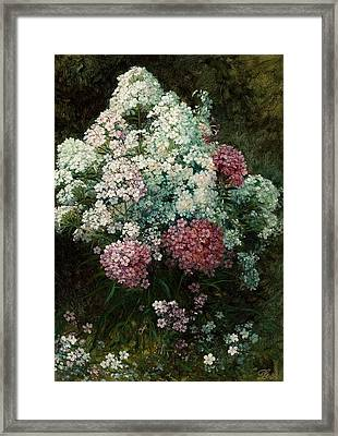 Phlox Framed Print by MotionAge Designs