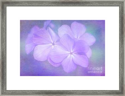 Phlox In The Evening Light Framed Print