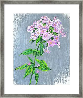 Phlox Framed Print by Linda Williams