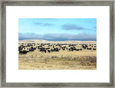 A Herd Gathers Framed Print