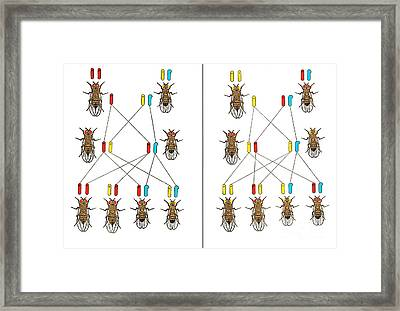 Physical Basis Of Heredity, T.h Framed Print